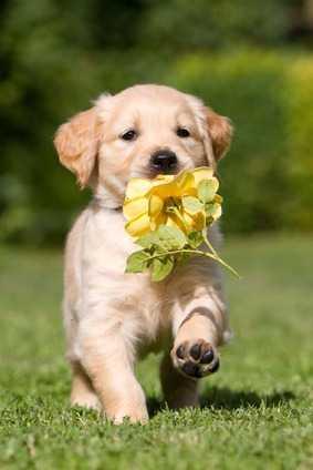 Arriva un cucciolo di cane, cosa fare? Prima visita dal veterinario, alimentazione, educazione, vaccini