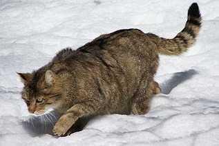 Trainer Personal per gatti anziani