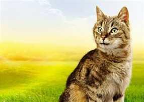 Un gatto in casa aiuta la crescita del bambino