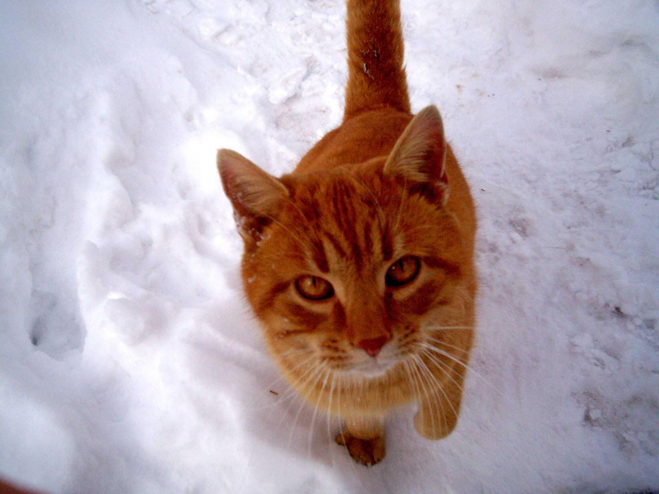 consiglio alimentazione per gatto sterilizzato