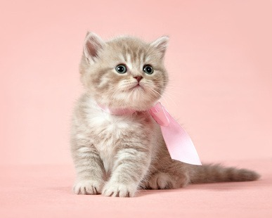 Alimentazione gattino piccolo