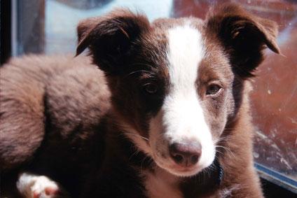 cucciolo cane veterinario, cucciolo cane alimentazione, cucciolo cane visita, cucciolo cane vaccini, vaccini cane, cucciolo cane educazione