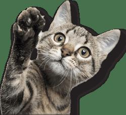 Cibo secco per gatti Trainer