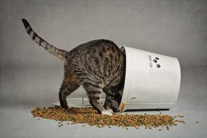 Alimentazione Grain Free per una gattina sterilizzata