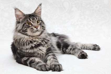 Alimenti Pericolosi Per I Gatti Che Si Trovano Normalmente Nelle Nostre Case