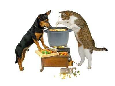 La sicurezza di alimenti per gatti Made in Italy