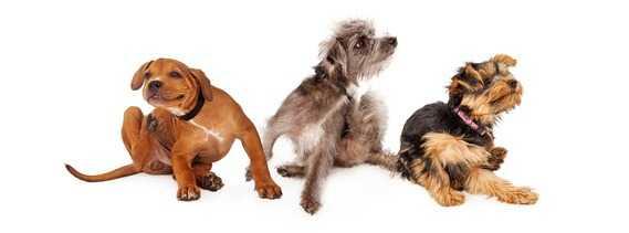 Sensibilità alimentare del cane: cos'è, come si manifesta, come si cura