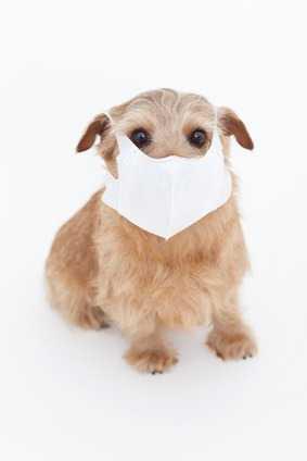 Come Affrontare Il Problema Del Prurito Del Cane, Esempio Pratico