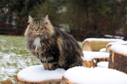 Con Quali Criteri Scegliere L'allevamento Dove Prendere Il Nostro Futuro Gatto?
