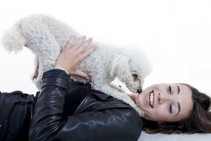 Barboncino nano cane da compagnia