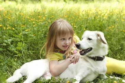 Calcolo dell'età del cane
