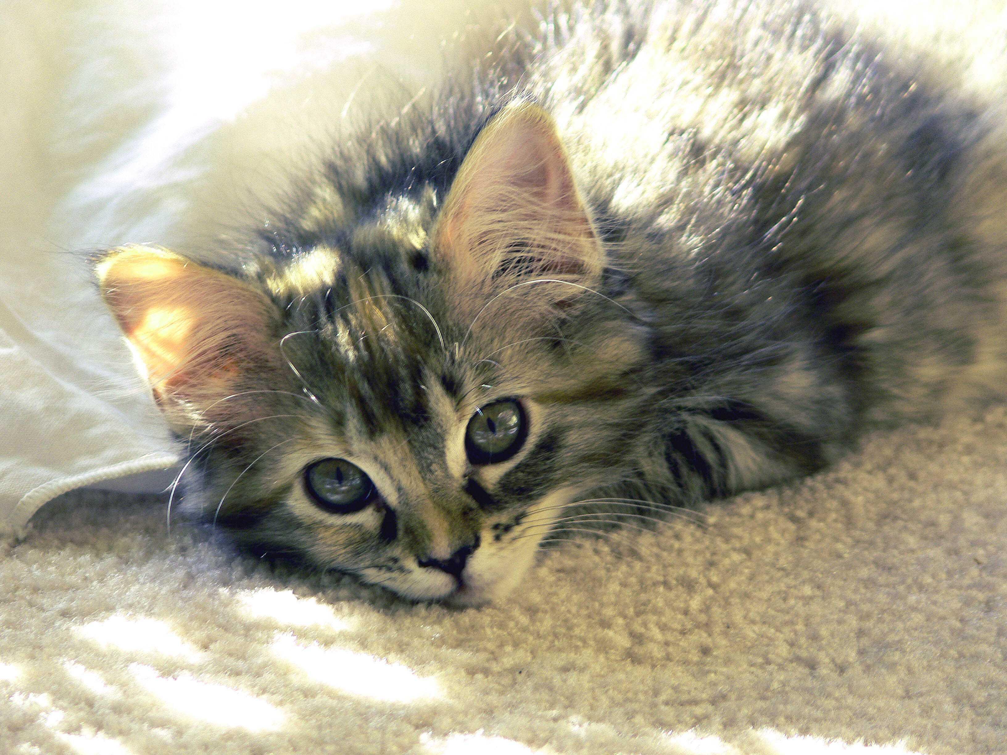 Cambiare casa: la reazione dei felini