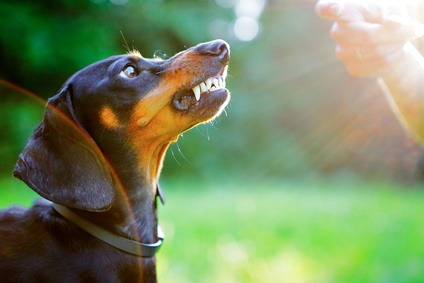 Poche Semplici Regole Per Non Avere Cani Aggressivi