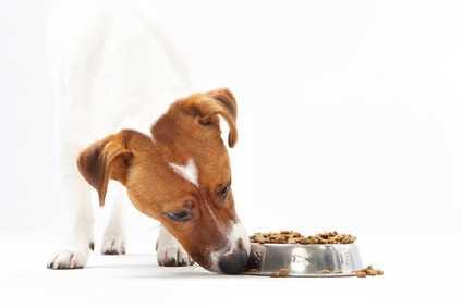 Cane che non mangia le crocchette, cane inappetente