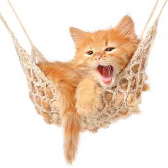 Capire il comportamento del gatto: il significato dei versi