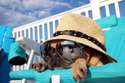 Malassorbimento Intestinale Per Un Cane Carlino