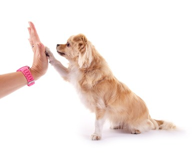 La prima accoglienza in casa del cucciolo