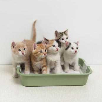come abituare un gattino alla lettiera - Quando in casa convivono più gatti