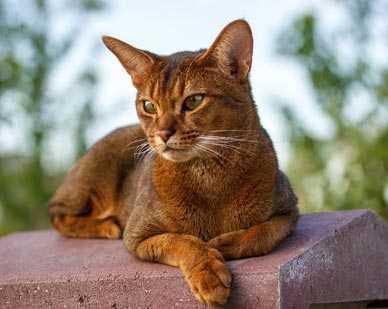Se il gatto fa pipì in casa