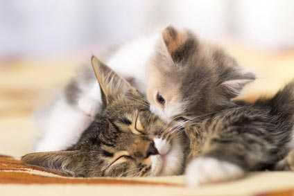 Come abituare un gattino alla lettiera - Quando i gattini imparano ad usare la lettiera