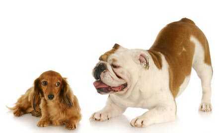 Come insegnare al cane a non abbaiare - Tecniche e rimedi efficaci per integrarlo in società