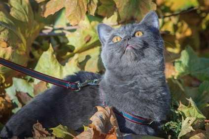 Come non far scappare il gatto dal giardino: recinzioni e supervisione