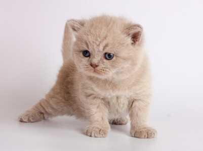Evitare che il gatto scappi - come non far scappare il gatto dal giardino