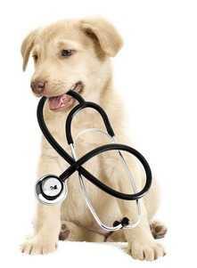 Come educare un cucciolo di cane - In attesa delle vaccinazioni