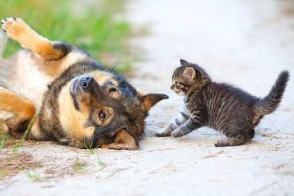 Come inserire un cane a casa quando c'è un gatto