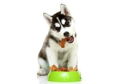 Gli alimenti secchi per cani Prolife, elevata qualità ed attenzione al benessere