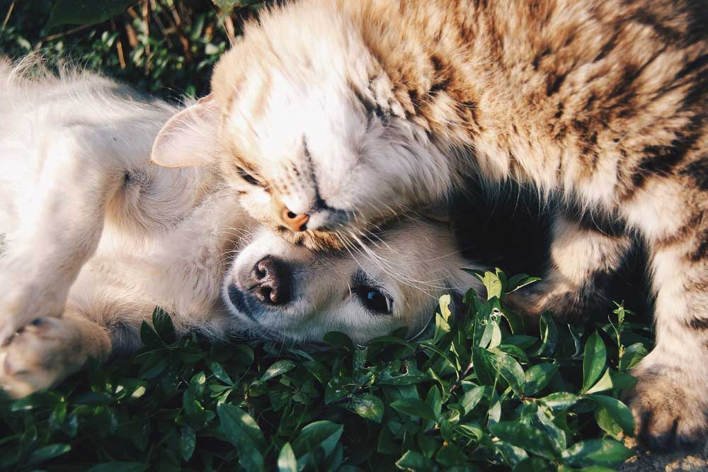 Linea crocchette per cani dalla Grana Pura Natura