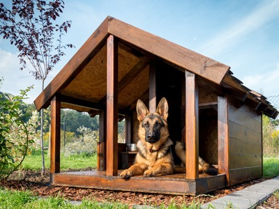 Caratteristiche Fondamentali Che Devono Possedere Le Cucce Per Cani Da Esterno
