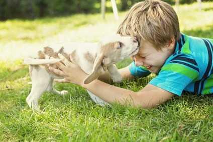 Perché i cani mordono i bambini?