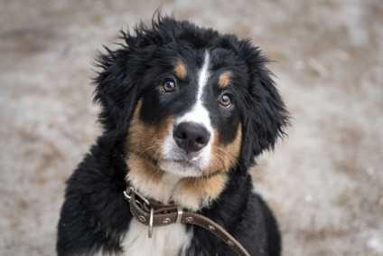 Lo sviluppo del cucciolo e lo svezzamento