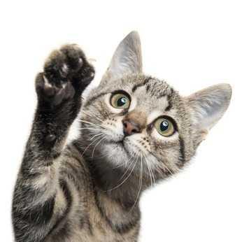 congiuntivite gatto cura