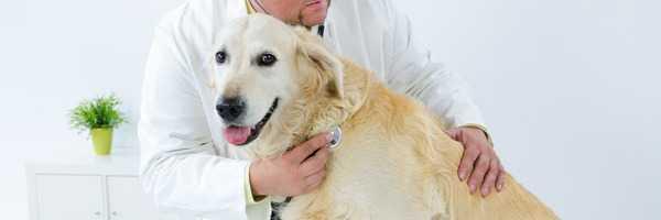 cura del cane anziano