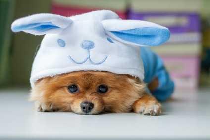 Cura e pulizia dentale fin da cuccioli - come lavare i denti al cane