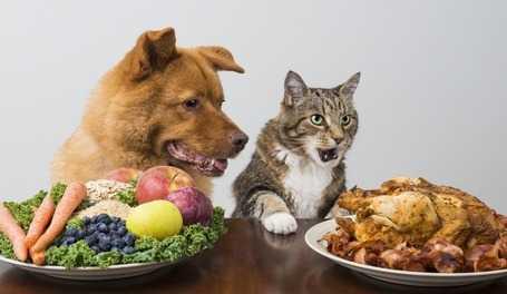 Particolari attenzioni nella dieta barf
