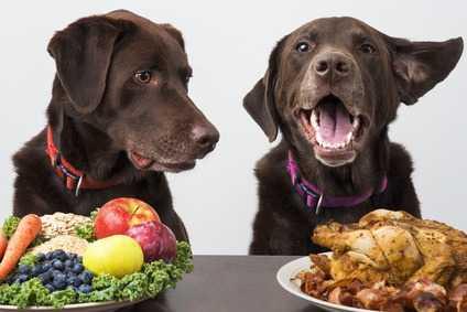 Carni e pesce di prima qualità alla base dell'alimentazione del cane