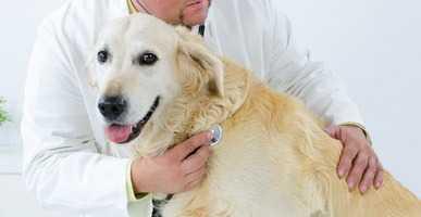 Displasia anca cane come riconoscerla