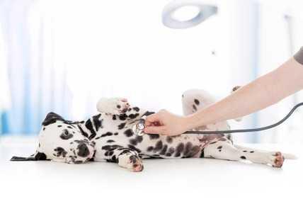 Displasia cane sintomi - La diagnosi precoce nei cuccioli