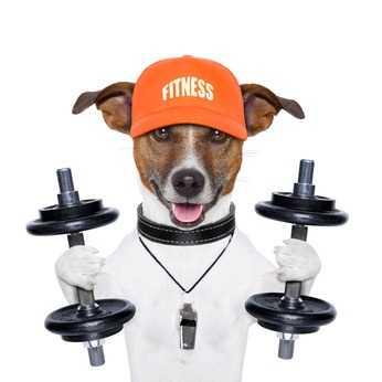 Alimenti ed obesità emotiva dei cani gatti ed attività fisica