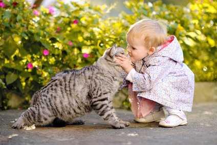 L'amore condizionato del gatto