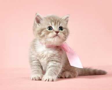 Aiutiamo il gatto ad abituarsi