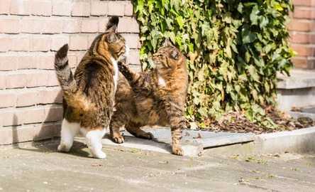 Gatto che scappa: a quali pericoli va incontro?