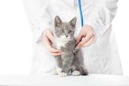 Gatto che fa pipì in casa, visita veterinario