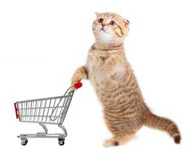 L'alimentazione del gatto in natura