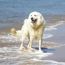 Giocare in spiaggia con il cane