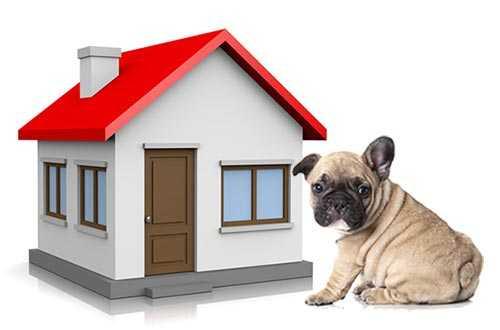 Imparare a gestire il cane per non disturbare i condomini
