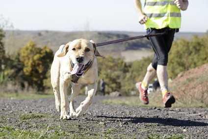 Accessori del cane per la corsa